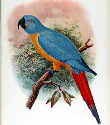 Savjeti zarobljene ptice