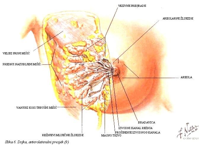 O karcinomu dojke