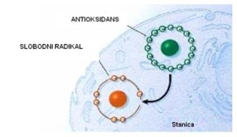 Antioksidansi – zaštitnici našeg zdravlja