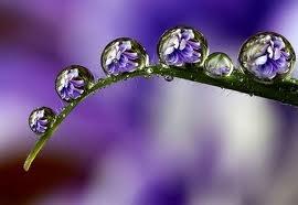 Kapi kiše