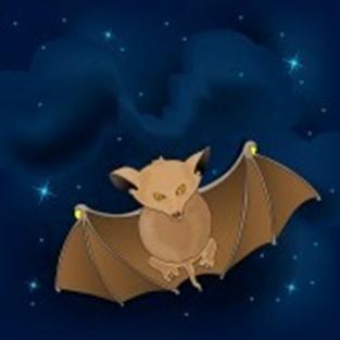 Zašto šišmiš leti noću