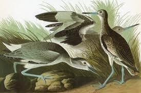 Ptičiji jezik