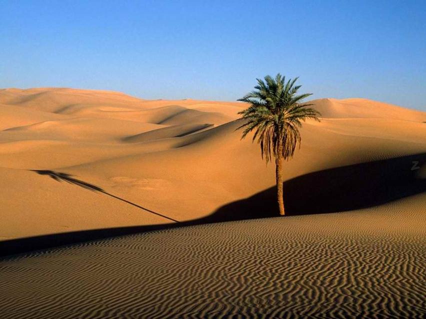 Plač palme