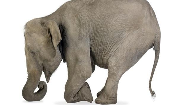 Vlasnici slona