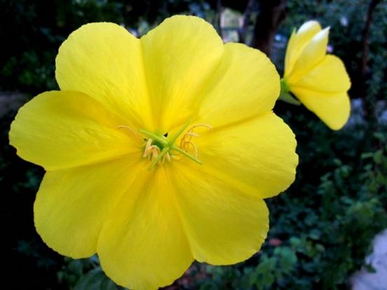Ezan cvijeće