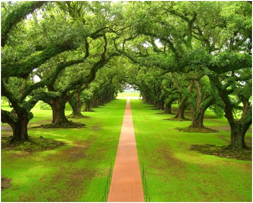 Kad bi drveće hodalo