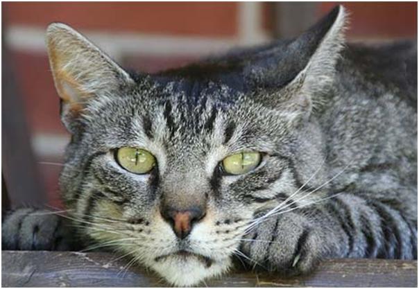 Zanimljive činjenice o domaćim mačkama