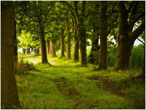Molitva šume