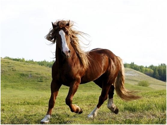 Konj i jelen