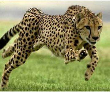 Najbrže životinje