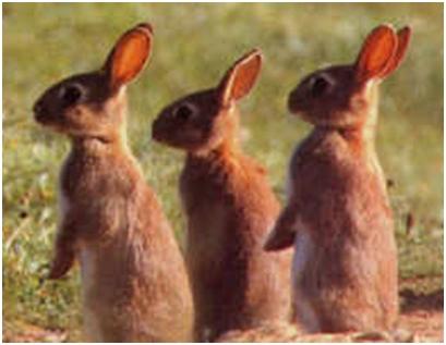 Hvalisavi zečevi