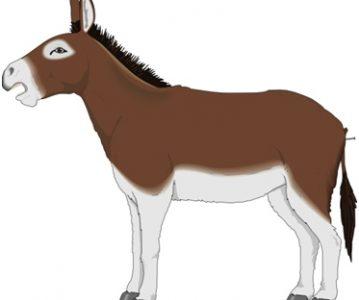 Izgubljeni magarac