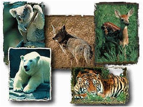 Učimo divlje životinje