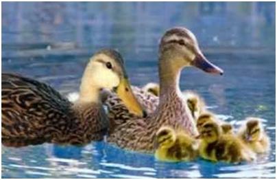Grupe domaćih životinja