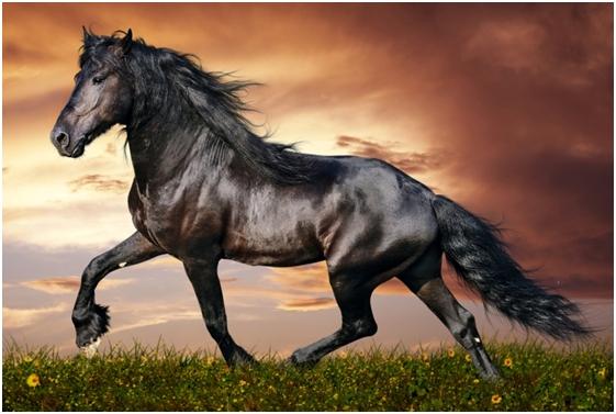 Sultan i konj njegovog zapovjednika