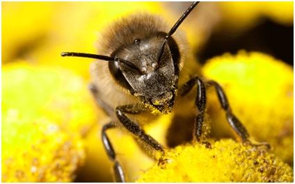"""Zašto je matica """"kraljica pčela""""?"""