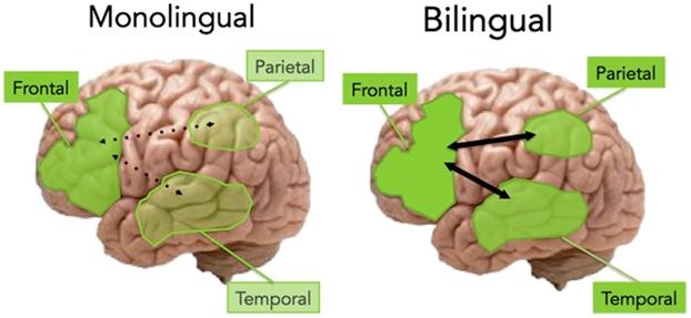 Zašto su dvojezičari pametniji?