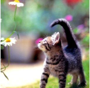 Mačak i cvjetići