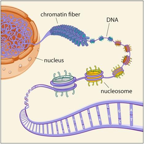 Epigenetika i karcinom