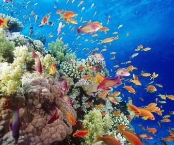 Allah je stvoritelj mora i života u njemu