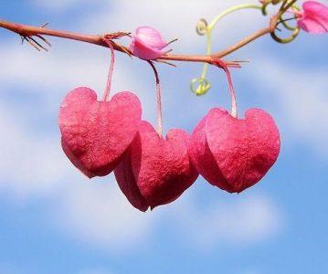 Poziv zasnovan na ljubavi