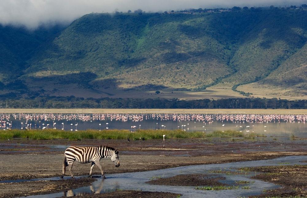 Ngorongoro – orijaški zoološki vrt pod vedrim nebom