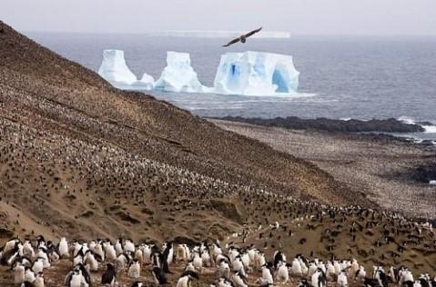 Otok Zavadovskij – najveća kolonija pingvina na svijetu