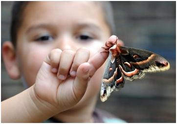 Znate li ko su djeca leptiri?