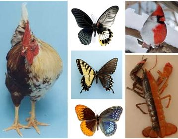 Dvolične životinje