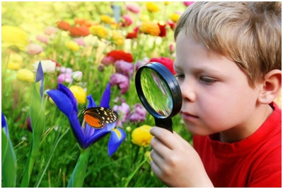 Kako nastaje šarenilo boja na krilima leptira?
