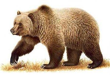 Hodža u lovu na medvjede