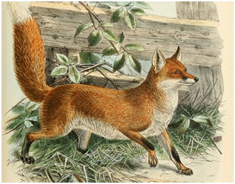 Drvar i lisica