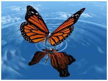 Sele li se leptiri?