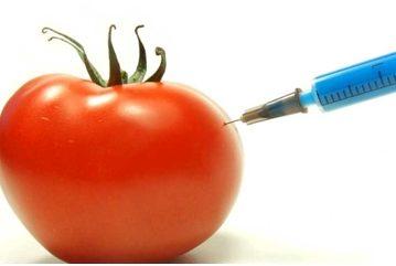 Genetički modificirana hrana
