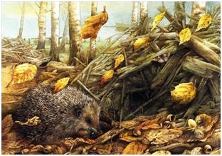 Priča o ježićima