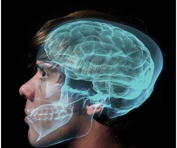 Mozak adolescenta: još uvijek u razvoju