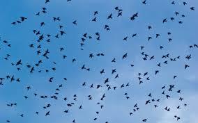 Zanimljivosti iz svijeta ptica