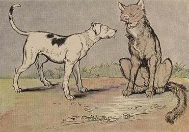 Vuk i pas