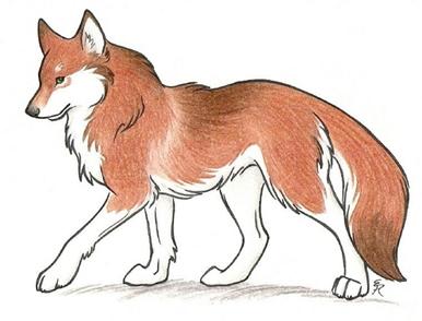 Teta lija i vuk