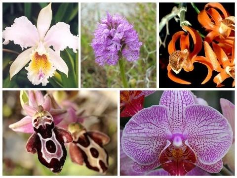 Orhideje koje oponašaju životinje