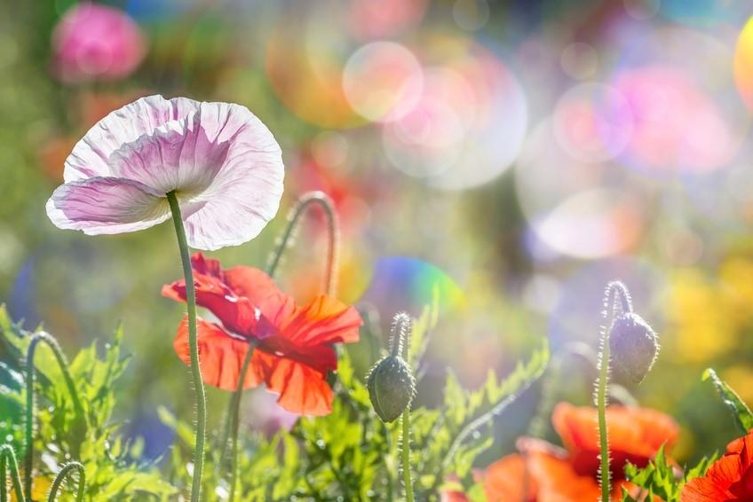 Podarimo proljeće i našim srcima