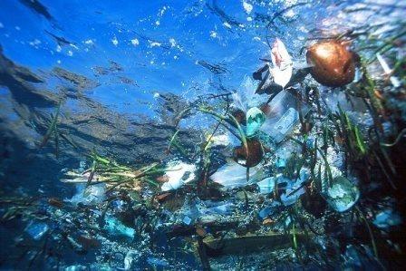 Plastisfera – nova životna zajednica u svjetskim morima