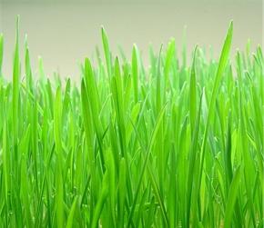 Čarobna trava