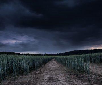 U poljima