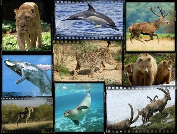 Rekorderi među sisarima