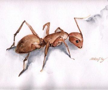 Sulejman i zaljubljeni mrav