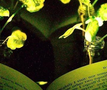 Jesu li svjetleće biljke rasvjeta budućnosti?