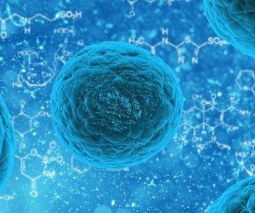 Matične stanice iz pupčane vrpce bi mogle regenerirati srce