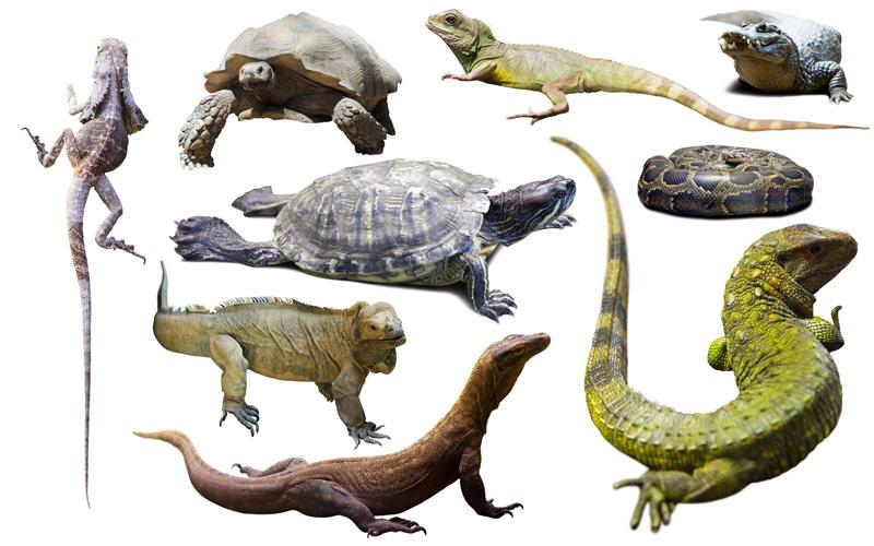 Rekorderi među gmizavcima