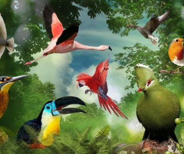 Govor ptica